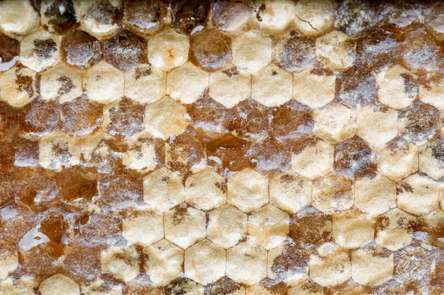Шаблон крупным планом honyecomb