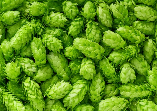 Hop cones , top view