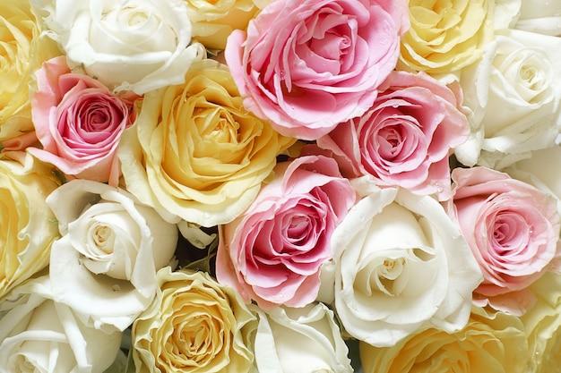 さまざまな繊細な色の美しいバラと水平方向の背景。 Premium写真