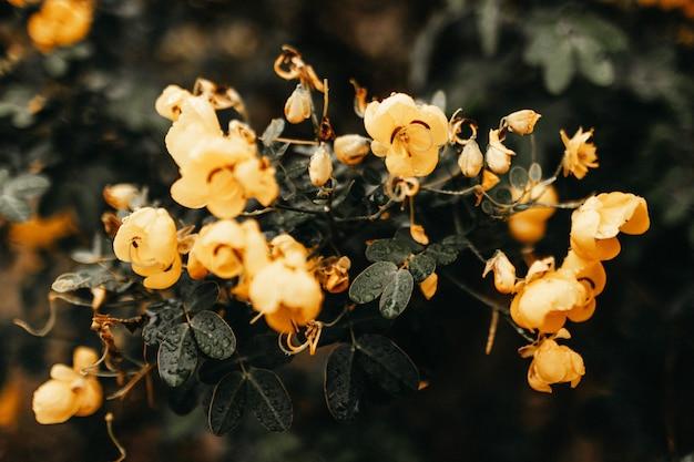 緑の葉と黄色い花を持つ植物の水平のクローズアップ