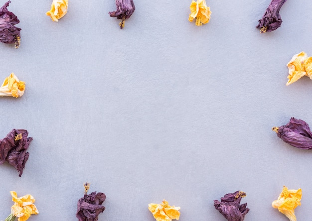 Horizontal composition of yellow and purple dried flowers forming a frame on a textured gray background with soft natural light