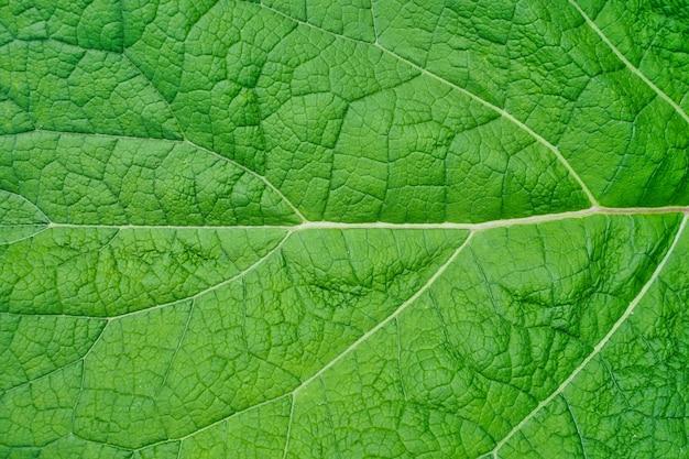 패턴 및 배경에 대한 수평 녹색 잎 텍스처