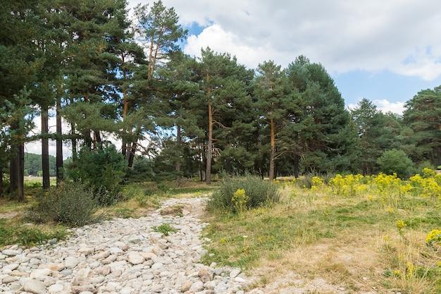 緑の芝生と曇り空の黄色い花に囲まれた松林の中の石の道の水平方向の画像