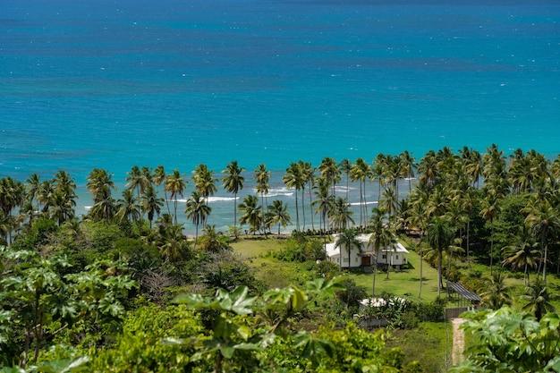 Горизонтальные линии неба, синей морской воды и ряда пальм с copyspace. фоновое изображение с копией пространства. фото высокого качества
