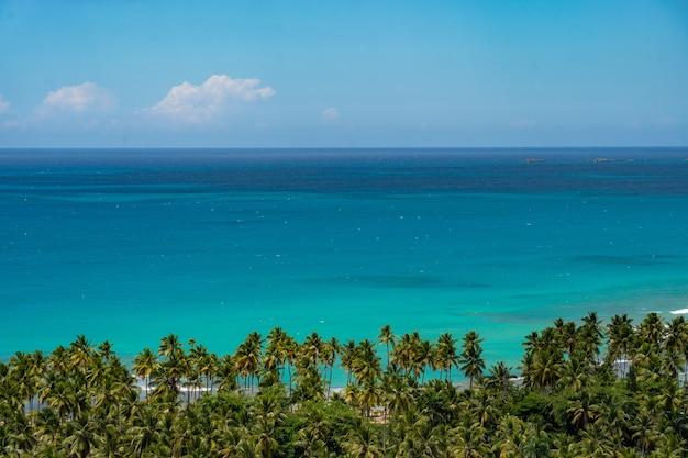 Горизонтальные линии небесно-голубой морской воды и ряд пальм с фоновым изображением copyspace с копией пространства