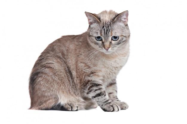 灰色のぶち猫の水平方向の画像