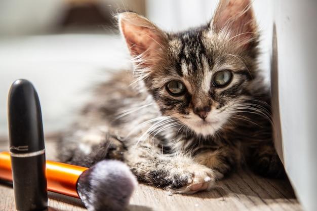 Inquadratura orizzontale di un gattino grigio guardando la telecamera e alcuni cosmetici accanto ad essa
