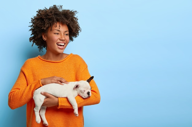 Horizontal shot of happy curly haired woman with toothy smile, gets small puppy as present, dressed in orange jumper, stands against blue wall. cute young female holds little french bulldog.
