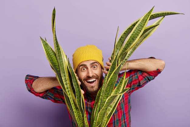 Horizontal shot of happy unshaven hipster dressed in yellow hat, plaid shirt, grows houseplant, being interested in botany, smiles gladfully, isolated over purple wall. florist with sansevieria