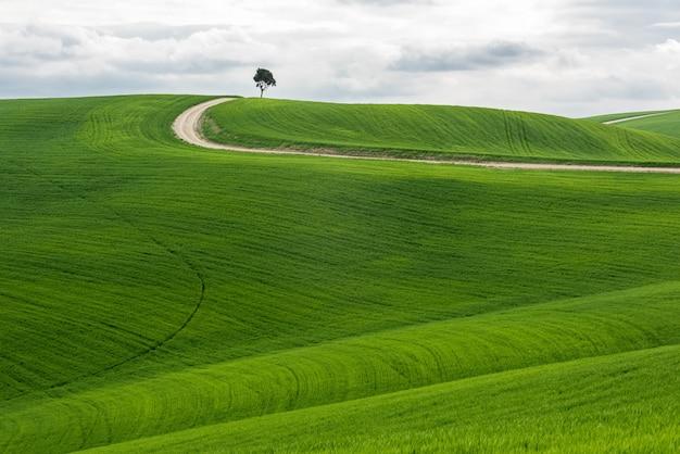 Colpo orizzontale di un albero isolato in un campo verde con una via sotto il cielo nuvoloso