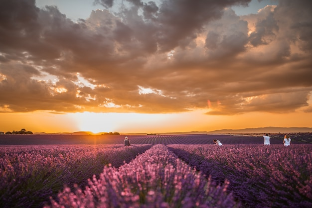 カラフルな曇り空の下で美しい紫色のイングリッシュラベンダーの花のフィールドの水平ショット