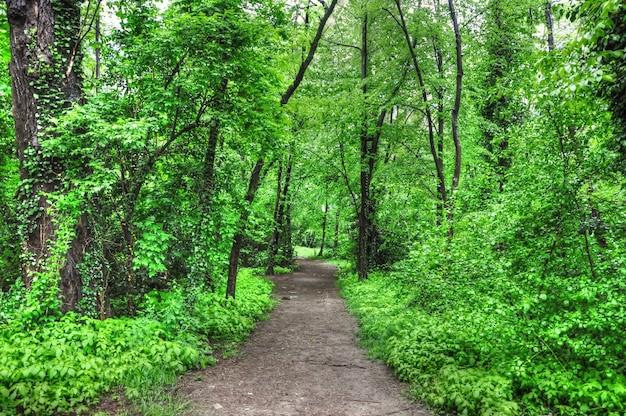 Горизонтальный снимок пустой тропы в зеленом лесу