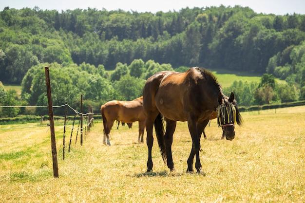 녹색 자연으로 둘러싸인 필드에서 갈색 말의 수평 샷