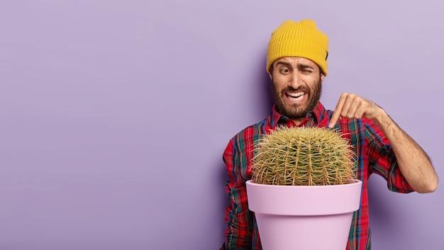 ハンサムな無精ひげを生やした男の人差し指をとげのあるサボテンに向け、カジュアルな市松模様のシャツと黄色い帽子をかぶって、鉢植えの植物と紫色の背景の上にポーズ、テキストのスペース領域をコピー