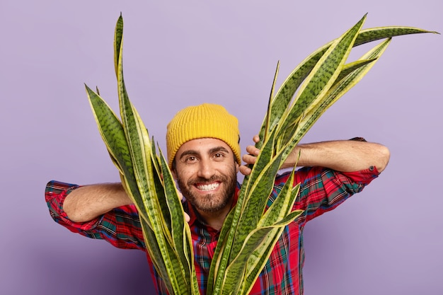 Горизонтальный снимок счастливого небритого флориста держит руки на сансиверии, носит желтую шляпу и клетчатую рубашку, выращивает дома комнатное растение, изолированное на фиолетовом фоне.