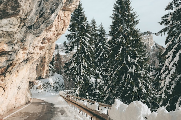 Horizontal shot of a road between the high rocky mountains and the fir trees covered in snow