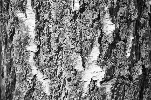 Horizontal texture of birch bark. background pattern