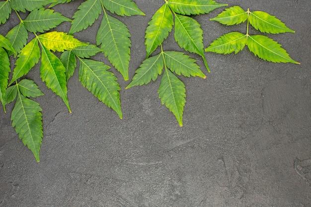 Vista orizzontale delle foglie di menta essiccate allineate in file su sfondo nero