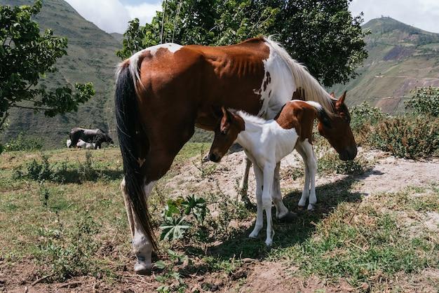 森の中で赤ちゃんの隣で放牧している馬の水平方向のビュー