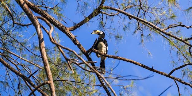 Hornbill on the tree