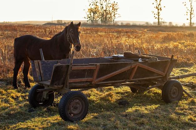 Лошадь и телега во время заката