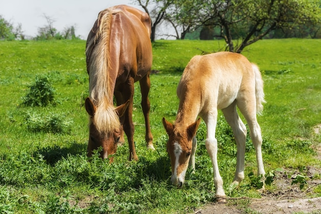 Лошадь и жеребенок на пастбище