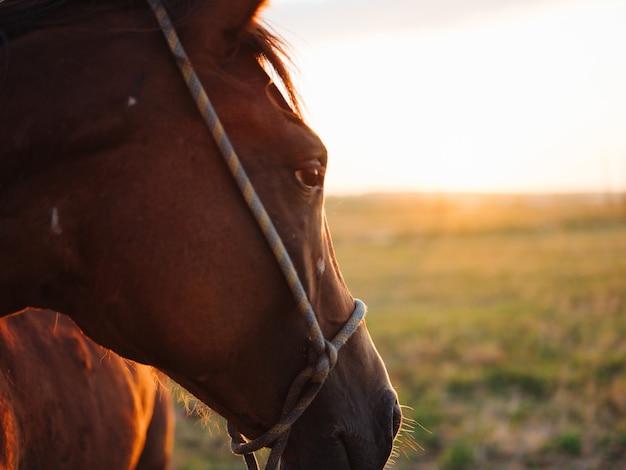 フィールドの馬の動物の哺乳類は新鮮な空気を歩きます