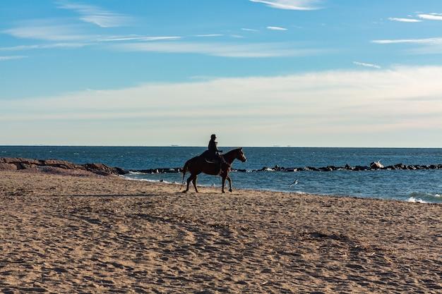 日中に女の子がビーチで馬に乗っている