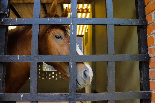 Horse in cage closeup image from zoo