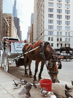 Конные экипажи ждут клиентов в центральном парке нью-йорка. лошадь ест корм в ожидании новых клиентов.