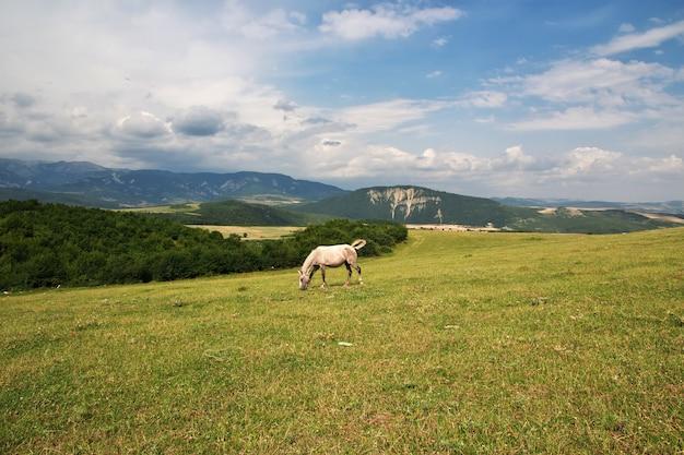 The horse in caucasian mountains, azerbaijan