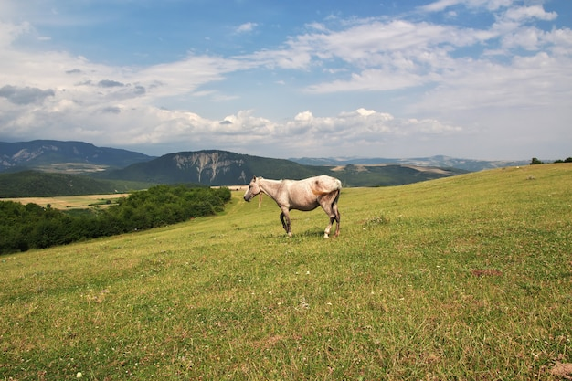 The horse in caucasian mountains
