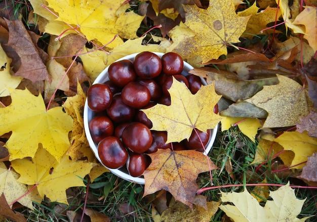 가을에 화려한 나무 잎에 말 밤나무