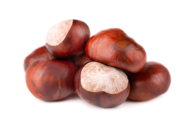 Horse chestnuts fruits, isolated on white space. aesculus hippocastanum.