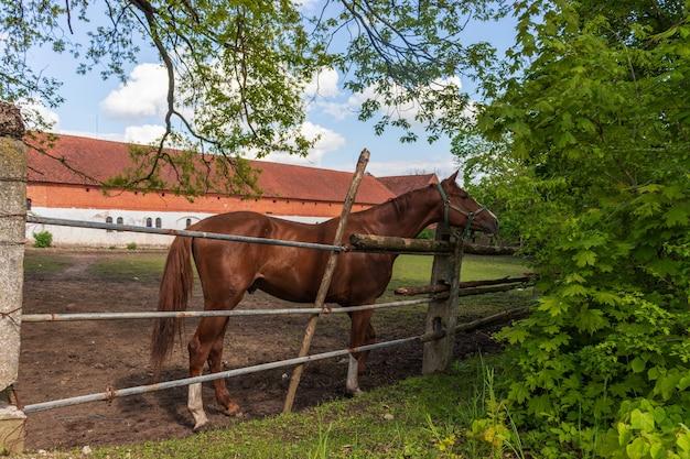 村の馬の中庭。ライダーと馬小屋の赤毛の馬、クローズアップ