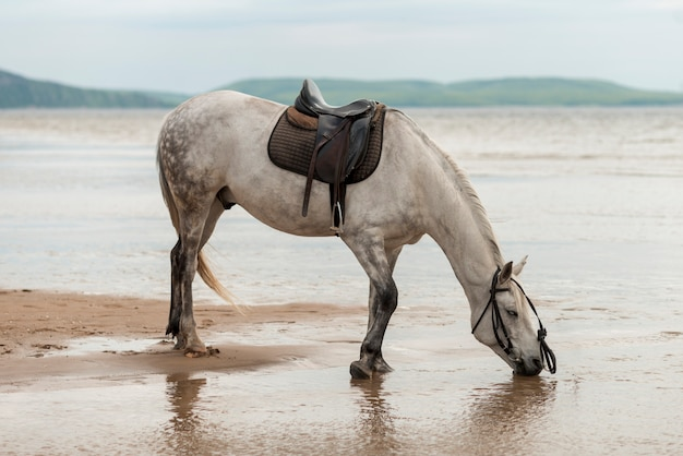 Horse drinking water on the beach