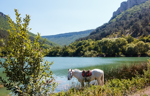 The horse drinks water by the lake