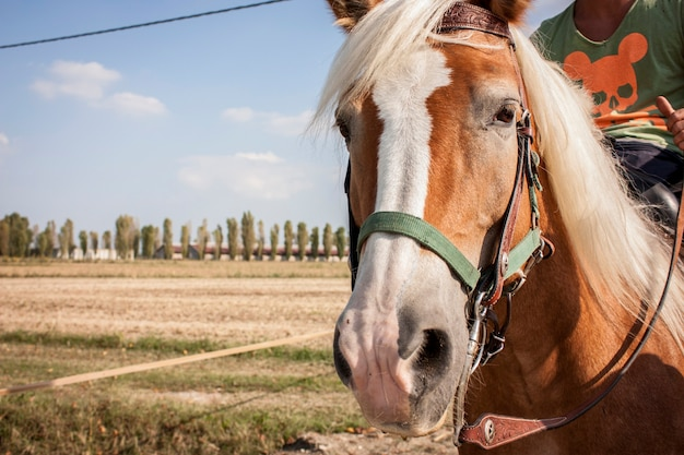 Horse during a summer walk in the countryside