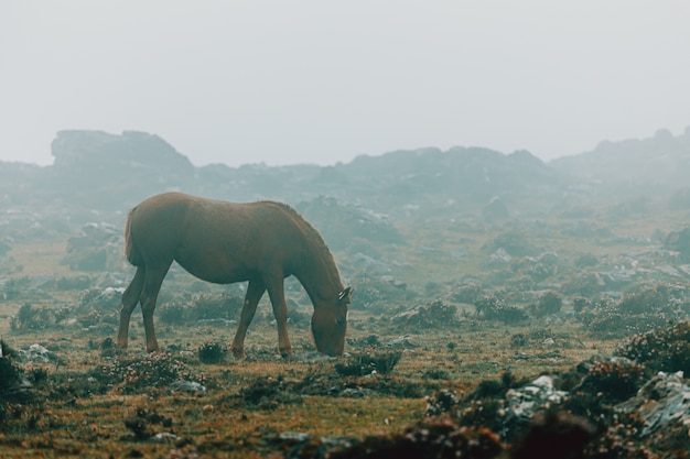 Horse eating grass on foggy weather