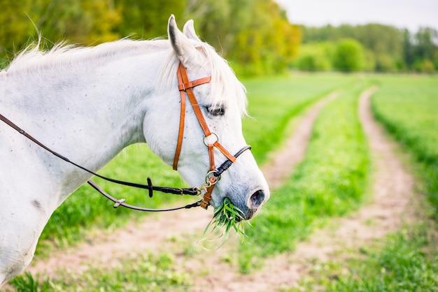 Лошадь ест траву в поле