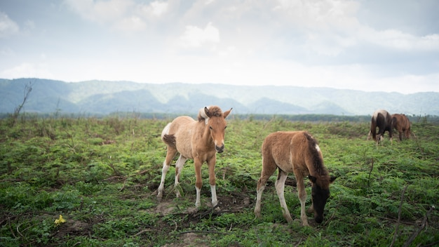 芝生の青い空の山で食べる馬