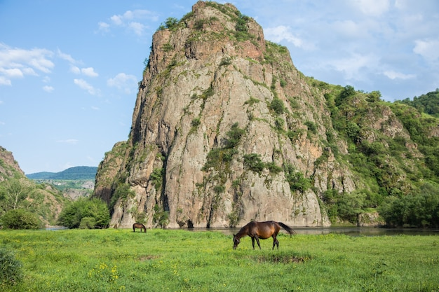 Horse eats grass by the river next to a large rock