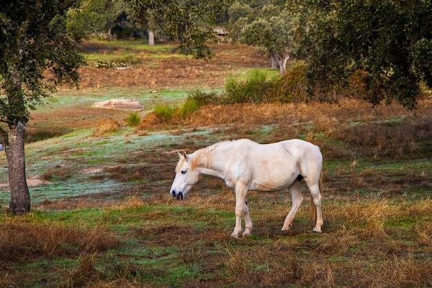 Horse in a field in dehesa de la luz.