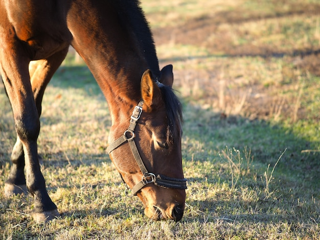 Horse in a field eating grass.