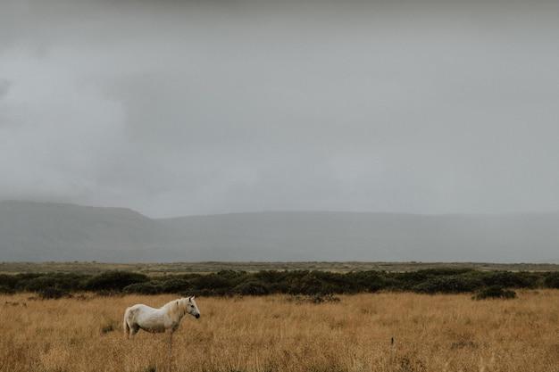 Cavallo sul campo