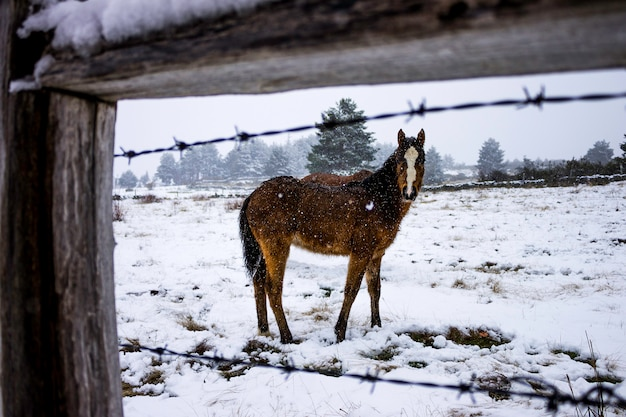 Horse foal in the snow.