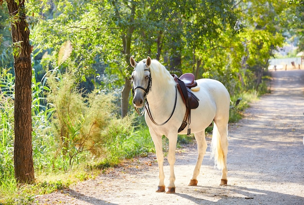 Horse in a forest track relaxed