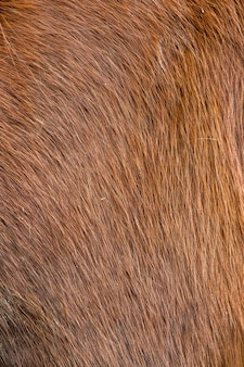 Horse fur close up background or texture