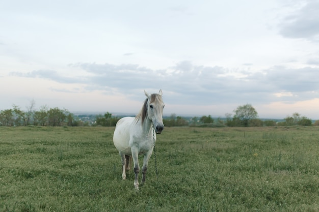 The horse grazes on a green lawn in cloudy weather. cloudy sky.
