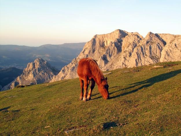 A horse grazes in the urkiola natural park.